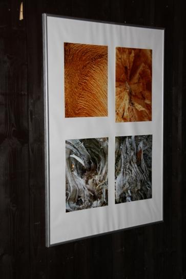 Vernisáž Odkaz stromů A. Šťastná 7.10.2011
